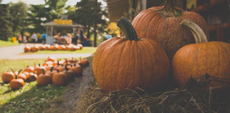 autumn events in reston
